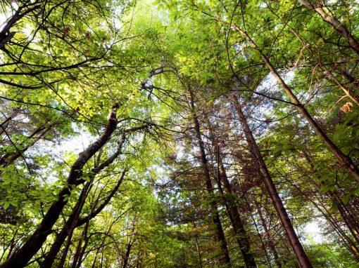 bosco natura parte 1